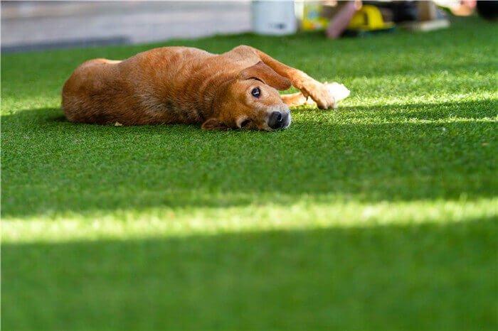 Pets Turf (4)
